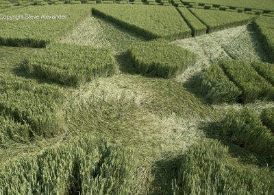 Stonehenge, Wilts | 7th July 2016 | Wheat Low5