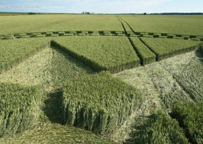 Stonehenge, Wilts | 7th July 2016 | Wheat Low3