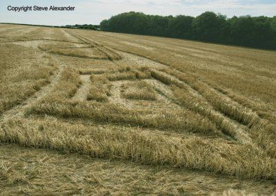 Ox Drove, nr Wylye   16th June 2016   Barley Low2