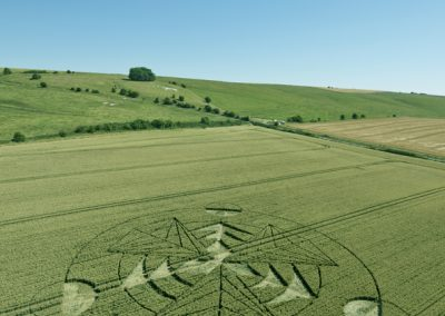 Hackpen Hill (2), Wilts |16th July 2016 | Wheat L