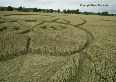 Figsbury Ring, Wilts | 22nd July 2016 | Wheat Low5