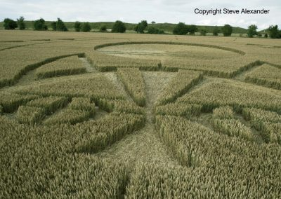 Figsbury Ring, Wilts | 22nd July 2016 | Wheat Low6