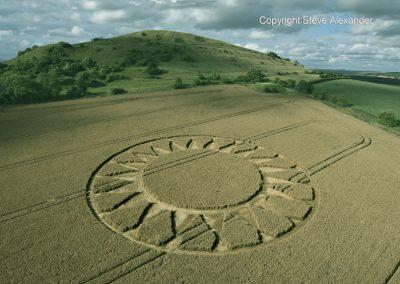 Cley Hill, nr Warminster, Wilts | 30th July 2016 | Wheat L2
