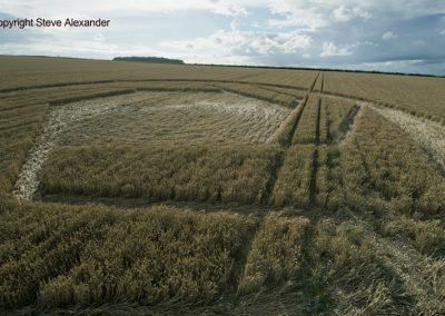 Matterley Basin,  Winchester, Hants   25th July 2016   Wheat Low4