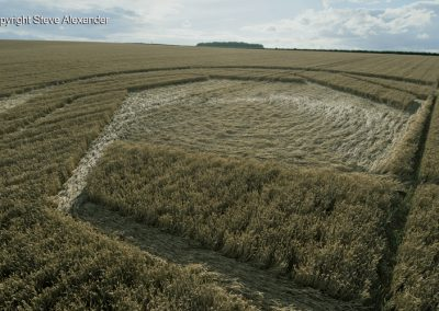 Matterley Basin,  Winchester, Hants   25th July 2016   Wheat Low2