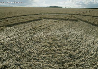 Matterley Basin,  Winchester, Hants   25th July 2016   Wheat Low3