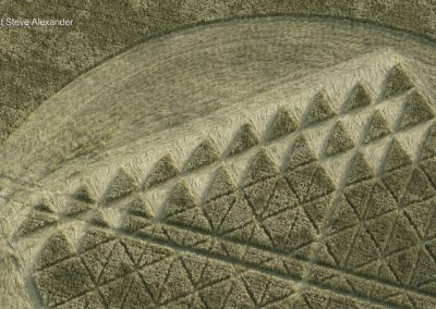 Chilcomb Ranges, Winchester, Hants   3rd August 2016   Wheat CU