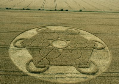 Nursteed Farm, nr Devizes, Wilts   17th August 2016   Wheat L3