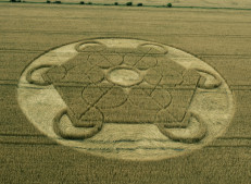 Nursteed Farm, nr Devizes, Wilts | 17th August 2016 | Wheat L3