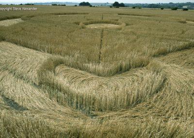 Nursteed Farm, nr Devizes, Wilts | 17th August 2016 | Wheat CL4