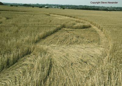 Nursteed Farm, nr Devizes, Wilts   17th August 2016   Wheat CL6