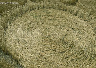 Nursteed Farm, nr Devizes, Wilts   17th August 2016   Wheat CL3