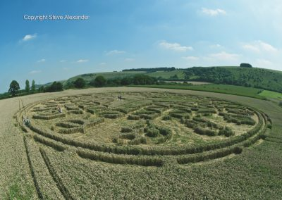 Ansty, Wilts | 12th August 2016 | Wheat P3
