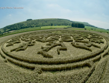 Ansty, Wilts | 12th August 2016 | Wheat P