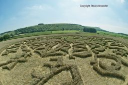 Ansty, Wilts | 12th August 2016 | Wheat P2