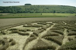 Ansty, Wilts | 12th August 2016 | Wheat P12