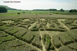 Ansty, Wilts | 12th August 2016 | Wheat P7