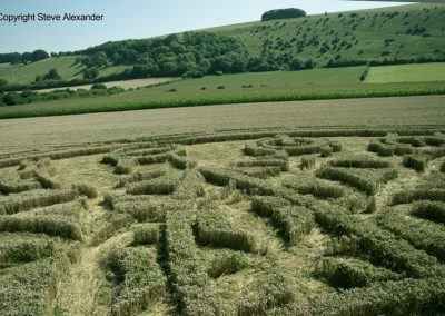 Ansty, Wilts | 12th August 2016 | Wheat P14