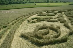 Ansty, Wilts | 12th August 2016 | Wheat P16