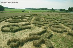 Ansty, Wilts | 12th August 2016 | Wheat P4