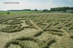 Ansty, Wilts | 12th August 2016 | Wheat P6