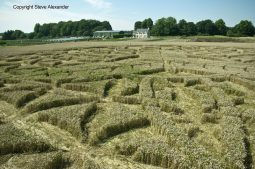 Ansty, Wilts | 12th August 2016 | Wheat P5