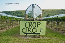 Ansty, Wilts | 12th August 2016 | Wheat OH - Crop Circle This Way