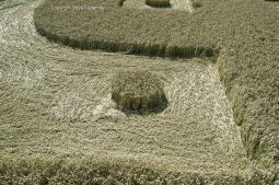 Cooks Plantation, nr Beckhampton, Wilts | 27th August 2016 | Wheat Low6