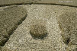 Cooks Plantation, nr Beckhampton, Wilts   27th August 2016   Wheat Low7