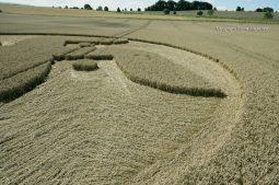Cooks Plantation, nr Beckhampton, Wilts   27th August 2016   Wheat Low3