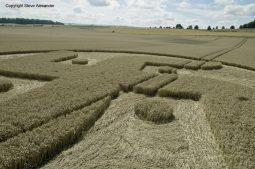 Cooks Plantation, nr Beckhampton, Wilts   27th August 2016   Wheat Low5