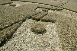 Cooks Plantation, nr Beckhampton, Wilts   27th August 2016   Wheat Low2