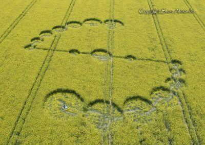 Willoughby Hedge, Nr Mere, Wilts | 4th May 2017 | Oilseed Rape OH2
