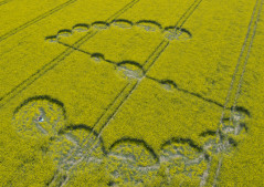 Willoughby Hedge, Nr Mere, Wilts | 4th May 2017 | Oilseed Rape L