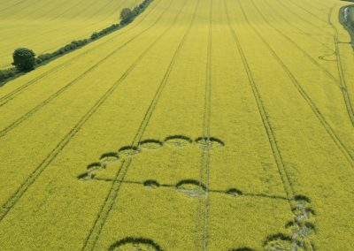 Willoughby Hedge, Nr Mere, Wilts | 4th May 2017 | Oilseed Rape L2