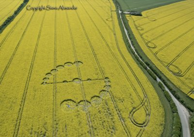 Willoughby Hedge, Nr Mere, Wilts | 4th May 2017 | Oilseed Rape L3