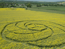 Waden Hill, Nr Avebury, Wilts    22nd April 2017   Oilseed Rape L3