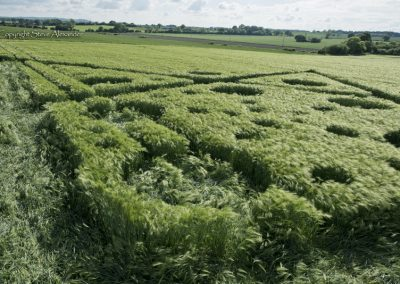 Broad Hinton (2), Wilts | 28th May 2017 | Barley | Low2