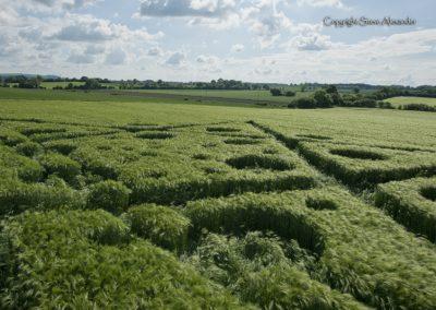 Broad Hinton (2), Wilts | 28th May 2017 | Barley | Low4