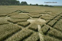 Target Wood, Badbury Rings, Dorset |16th June 2017| Barley | LOW2