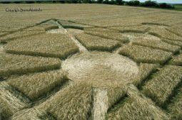 Target Wood, Badbury Rings, Dorset |16th June 2017| Barley | LOW3