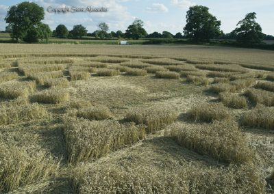 Bydemill Copse, Cannington, Wilts | 4th Aug 2017 | Wheat | Low5