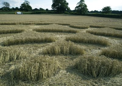 Bydemill Copse, Cannington, Wilts | 4th Aug 2017 | Wheat | Low10