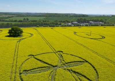 Willoughby Hedge, Wilts | 8th May 2018 | Oilseed Rape | L3