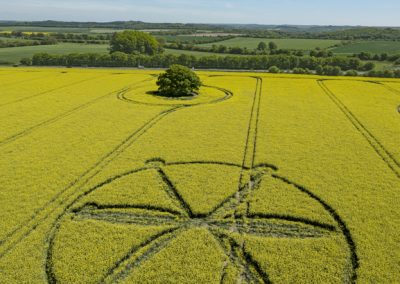 Willoughby Hedge, Wilts | 8th May 2018 | Oilseed Rape | L
