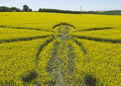 Willoughby Hedge, Wilts | 8th May 2018 | Oilseed Rape | Low3