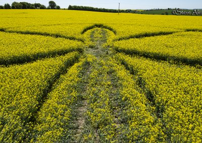 Willoughby Hedge, Wilts | 8th May 2018 | Oilseed Rape | L5