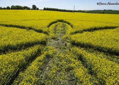 Willoughby Hedge, Wilts | 8th May 2018 | Oilseed Rape | Low2