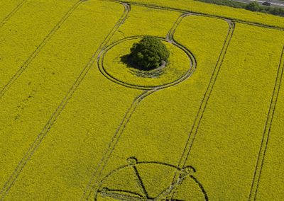 Willoughby Hedge, Wilts | 8th May 2018 | Oilseed Rape | L7