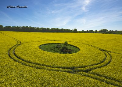 Willoughby Hedge, Wilts | 8th May 2018 | Oilseed Rape | TU2